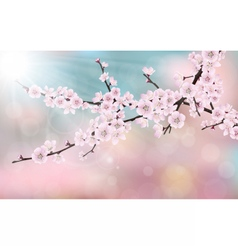 blossom cherry tree branch vector image vector image