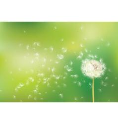 Dandelion green background vector