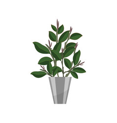 Bonsai house plant realistic icon for interior vector