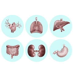Different parts of human body vector