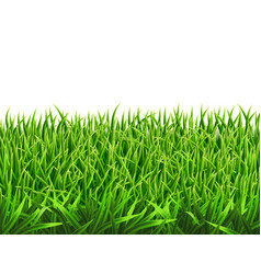 grass on a meadow vector image vector image