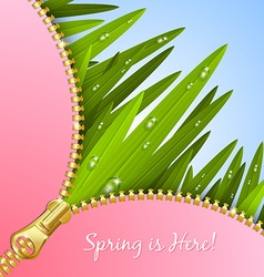 Spring grass with zipper vector image vector image