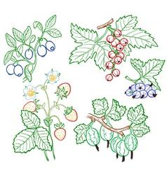 berries set vector image
