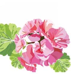 Delicate pink geranium flowers vector