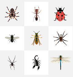 Realistic midge ladybird poisonous and other vector