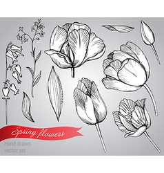 Set of hand-drawn spring flowers tulips vector image vector image