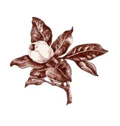 Summer garden magnolia flower bud sketch vector