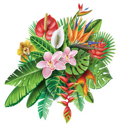 arrangement from tropical plants vector image