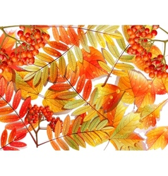 Group autumn multicilor leaves on white vector
