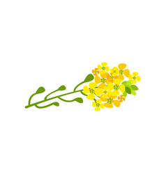 Rapeseed flowers cartoon vector