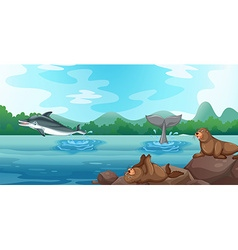Scene with dolphins and seals vector image