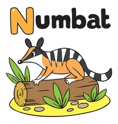 Little numbat for abc alphabet n vector