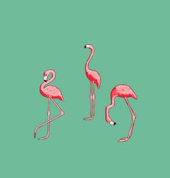 With flamingo vector