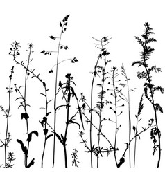 Wild plants silhouettes vector