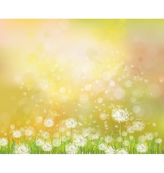 floral spring sunshine background vector image