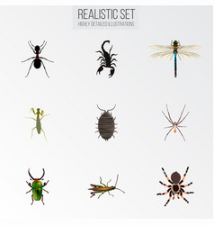 Realistic damselfly poisonous dor and other vector