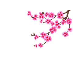 Sakura the curved branch of a blossoming cherry vector
