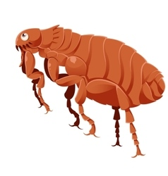 Cartoon flea vector