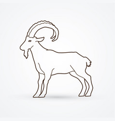 mountain goat ibex standing vector image vector image
