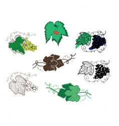 set of grape design elements vector image