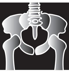 Xray pelvic bones vector