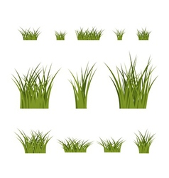 Green grass bushes plant isolated vector