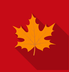Maple leaf icon in flate style isolated on white vector