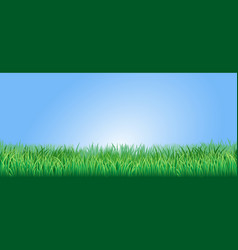 lush green grass vector image