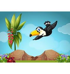Toucan flying in the garden vector image