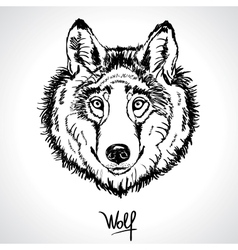 Wolf drawing vector