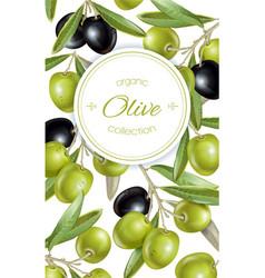Olive vertical banner vector image