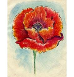 Poppy Flowers Sketch03 vector image