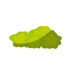 Isolated bush cartoon vector