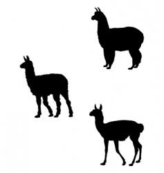 Lama alpaca guanaco vector