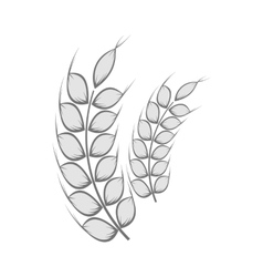 Spikelets of wheat icon black monochrome style vector image vector image