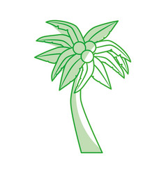 tropical tree palm with coconuts vector image