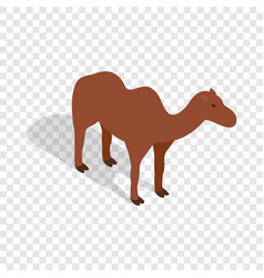 Camel isometric icon vector