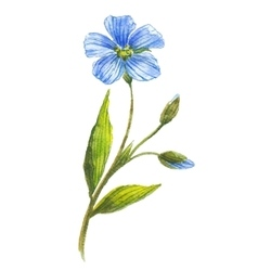 Blue flower of flax vector image