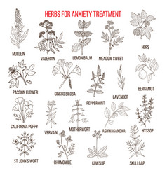 Collection of herbs for anxiety treatment vector