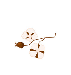 Cotton branch with seed bolls cartoon vector