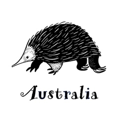 Echidna icon in doodle style logotype for vector