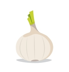 Garlic flat style Isolated object Vegetable from vector image vector image