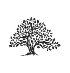 huge and sacred oak tree silhouette logo badge vector image