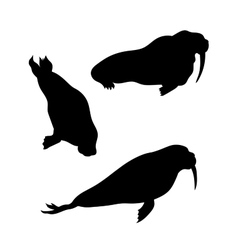 Walrus silhouettes vector