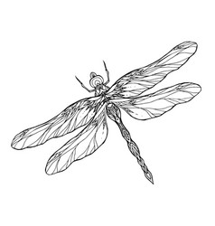 black and white dragonfly with a boho pattern vect vector image