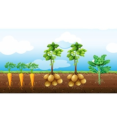 Many vegetables growing on the farm vector