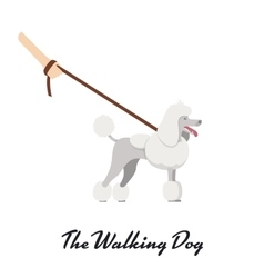 color of the dog white Grand Poodle breed vector image