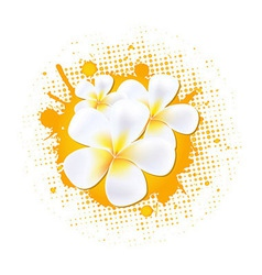 Flower background with frangipani vector