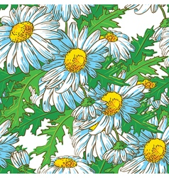 Seamless pattern with chamomile flowers vector
