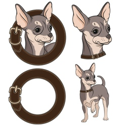 Color with chihuahua in a collar vector